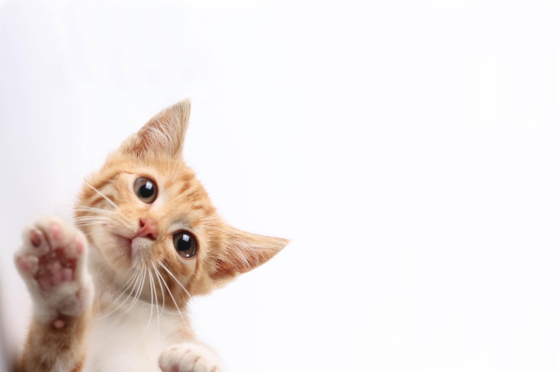 ozadje-dietic-cat41