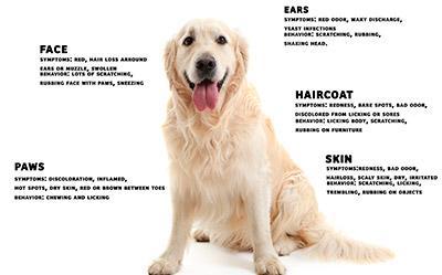 Suha hrana za občutljive pse